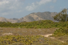 So this is what a deserted island actually looks like - on Tintimarre